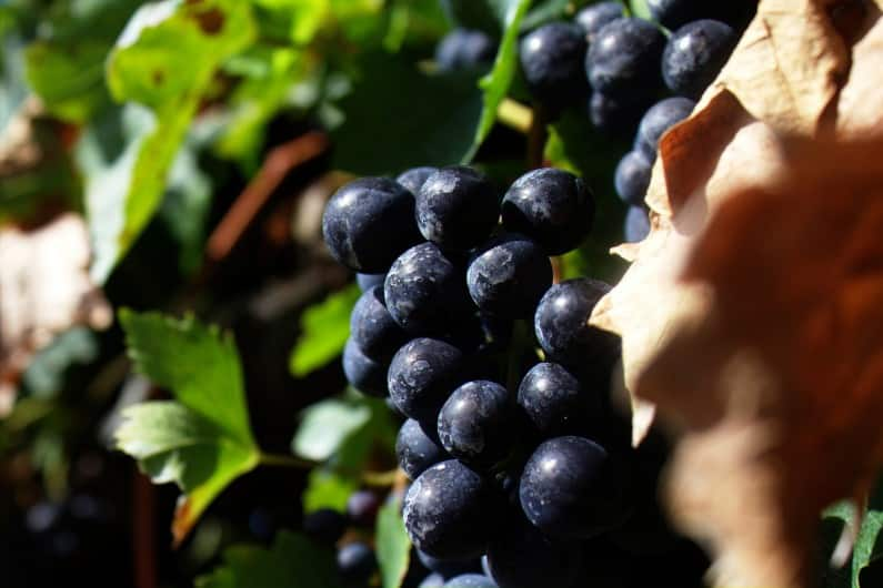 Britain Uncorked: Wine-Making Industry in the UK