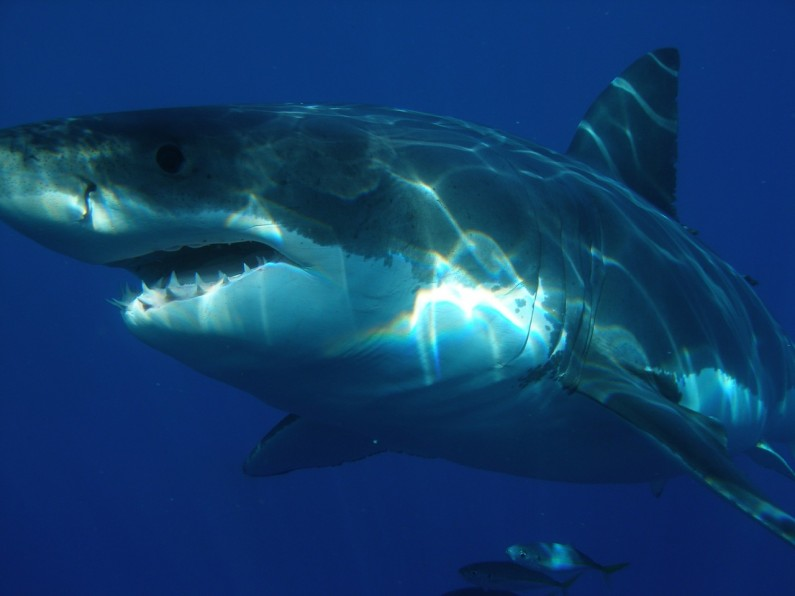 What to do if you're bit by a loan shark